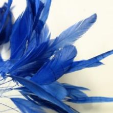 Royal Blue Stripped Coque Feathers